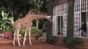 Giraffe Floor L Giraffe Manor Kenya