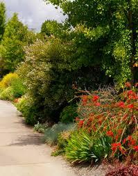 native plant nursery portland oregon making a heaven of hellstrips