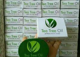 Sabun Tto msi tea tree plus stokis pt mahakarya sejahtera indonesia