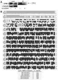 what is 138 311 as a percent caenorhabditis elegans cyclin b3 is required for multiple mitotic