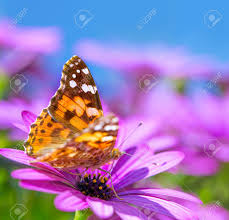 clopseup photo of beautiful butterfly with gorgeous colorful