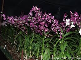 orchid garden design buy orchids in india indian orchids
