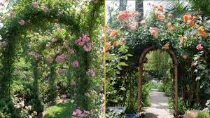imagenes flores relajantes hermosas flores relajantes youtube