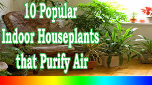 best indoor plants 10 popular indoor houseplants that purify air