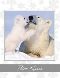 polar kisses polar cards office