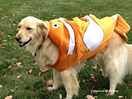 calypso in the country halloween costumes for dogs