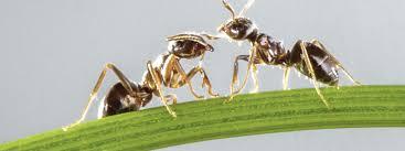 ants jpg