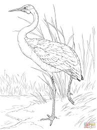 australian brolga coloring page free printable coloring pages