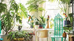 home interior plants the jungle look indoor plants home the sunday times