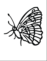 click the blue butterfly coloring pages monarch caterpillar page