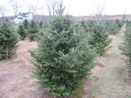 real christmas trees rule u2013 ridinkulous