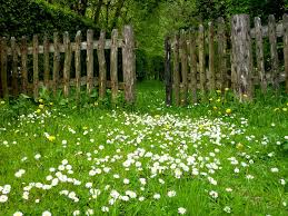 free photo spring garden fence meadow plant daisy flowers max pixel