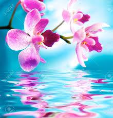 imagenes flores bellisimas bellas flores orquídeas se reflejan en el agua fotos retratos