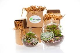 succulent kits modern succulent terrarium globe duo terrarium kits hanging