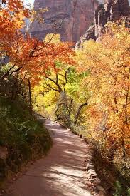 18 best thanksgiving zion trip images on zion national