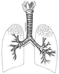 respiratory system coloring pages coloring home