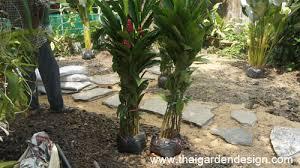 Tropical Rock Garden Shade Planting For A Tropical Rock Garden Thai Garden Design