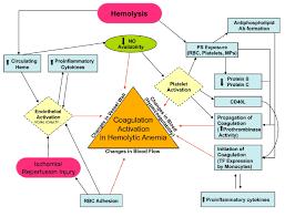 hypercoagulability and thrombotic complications in hemolytic
