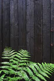 best 25 black fence ideas on pinterest black fence paint fence