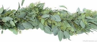 seeded eucalyptus fresh premium garland by pacific garland pacific