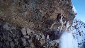 narrow picture ledge dog gets stuck on steep snowy mountain ledge in utah ksl com