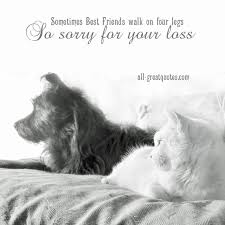sympathy cards for pets so sorry for your loss free sympathy cards for pets