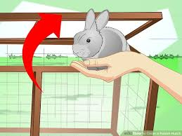 Heavy Duty Rabbit Hutch 3 Ways To Clean A Rabbit Hutch Wikihow