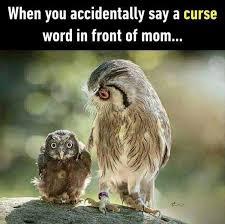 Moo Meme - inspirational moo like no one is watching crazyjewishmom hilarious