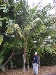 palm sunday palms for sale gregory palm farms september 2011