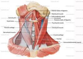 Google Body Anatomy Upper Body Anatomy Google Search Anatomy Pinterest Body