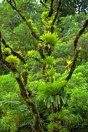 Tropical Rainforest Plant List - tropical rainforest population and community development and