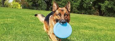 hill u0027s prescription diet dog food petsmart