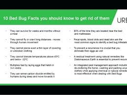 natural bed bug remedies getting rid of bed bugs naturally bed bugs 2 how to cure bed bug