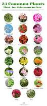 List Of Flowers by 23 Common Plants Poisonous To Pets Care2 Healthy Living