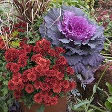 pin mcfall berry landscape management fall annuals
