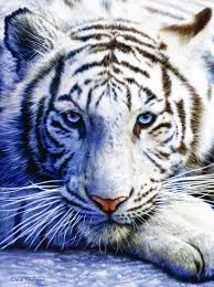 amazon com white tiger 1000 pc jigsaw puzzle toys