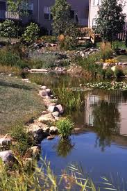ornamental and retention ponds bridging the gap between