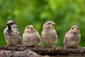 birds celebrate urban birds