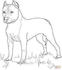 american staffordshire terrier coloring page free printable