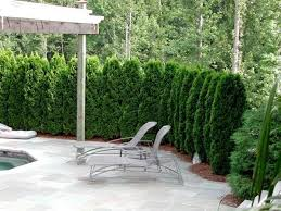 Privacy Screen Ideas For Backyard by Privacy Fence Screen Pool Deck Privacy Outdoor Privacy Screen