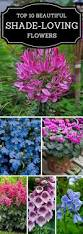 list of fall flowers best 25 front flower beds ideas on pinterest flower beds