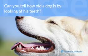 Dog Tooth Anatomy Dr Ernie U0027s Top 10 Dog Dental Questions And His Answers