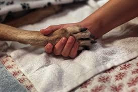 dog euthanasia euthanasia padonia veterinary hospital