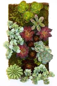 succulent garden 40 types of succulents and grasses