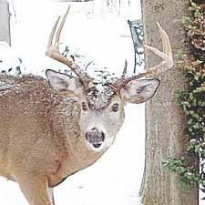 north country woman takes issue with request to stop posting