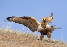 israel u0027s 500 million birds the world u0027s eighth wonder israel