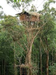 25 tree houses that make you wish you lived in a tree 5