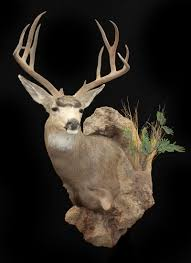 Deer Pedestal Mogollon Taxidermy Mule Deer Wall Pedestal And Little Javelina