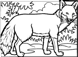 98 dessins de coloriage animaux de la foret à imprimer
