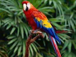 super colorful parrot backgrounds 2695 hdwarena
